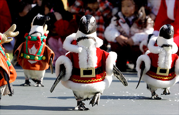 real-christmas-penguins-cute
